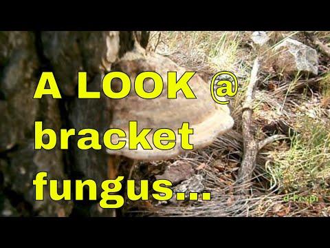 Tree Fungi: Bracket #fungus on trees - Spring to Autumn