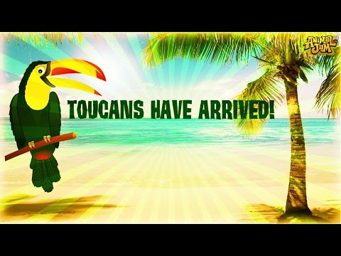 TOUCANS ARE HERE!!! ~THE CUTEST ANIMAL?!