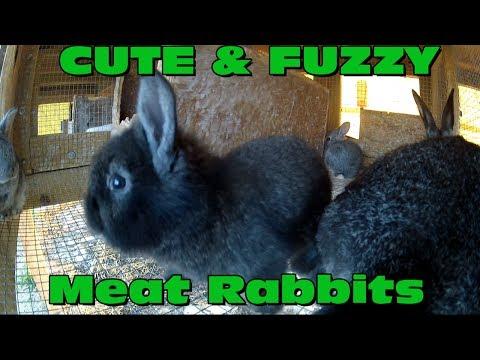 Meat Rabbits - Pandoras kit April 4,2014