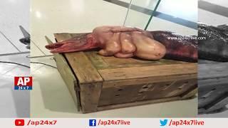 Exclusive Video Of Real Mermaid Jalakanya Found In Visakhapatnam Beach | AP24x7
