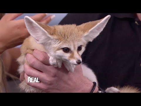 Jack Hanna Brings Furry Friends