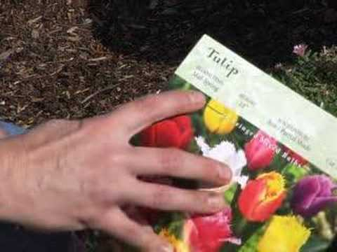 Planting flower bulbs and STEPABLE plants together