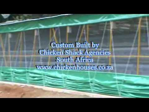 Video of a chicken house for egg production