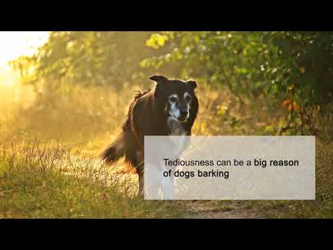 STOPPING THE BARKING HABIT IN YOUR DOG