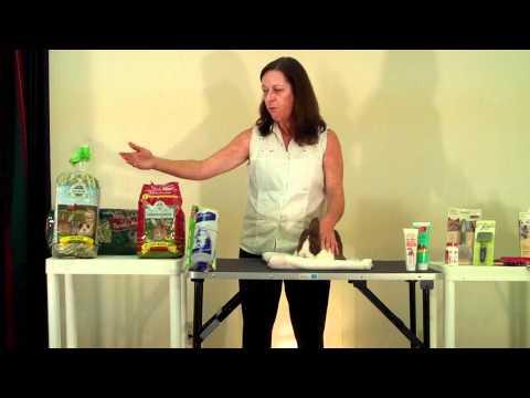 Preventing Hairballs in Rabbits