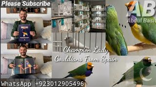 Lady Gouldians Breeder IVAN VERA From Spain The Champion Birds   Exhibition Lady Gouldians