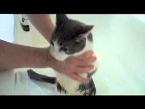 Cat Cries Like A Human Baby