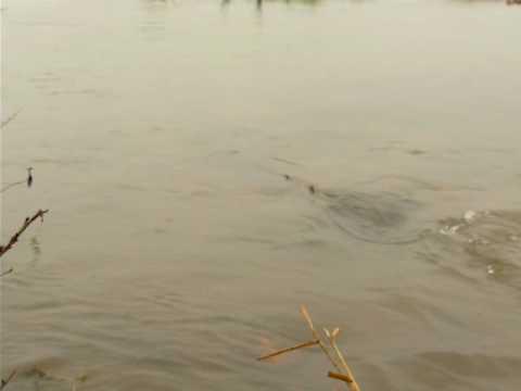 La truite ouvre ce samedi 16 mars à 6h24 - évitons le wading, SVP !