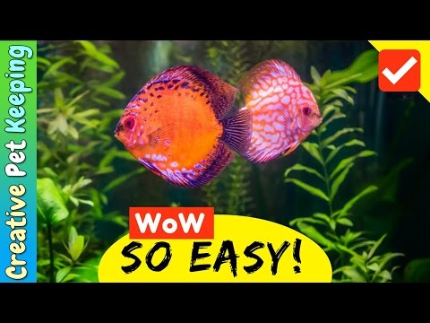Quickest way to cycle a fish tank | Tank Seeding and Nitrifying Bacteria in a Bottle | SO EASY!
