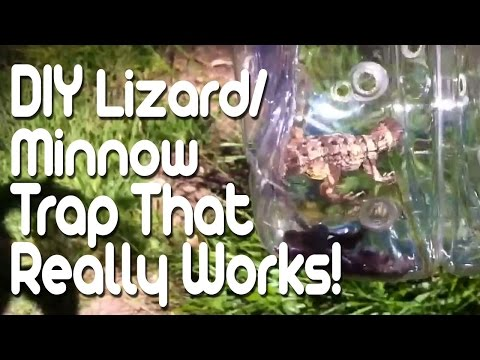 DIY Lizard/Minnow trap that really works!