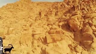 صيد وعل تصوير بكاميرا مثبته على الراس...( الوعــر )