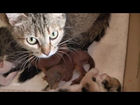Ukrainian Cat Adopts Two Abandoned Baby Squirrels