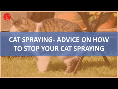 Cat Spraying | How To Stop Your Cat Spraying In House - Training Pet Easy
