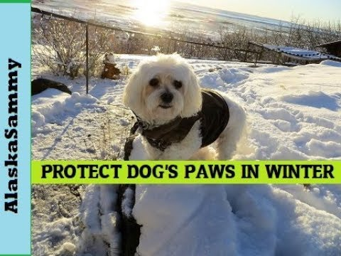 Protect Your Dog's Feet In Winter