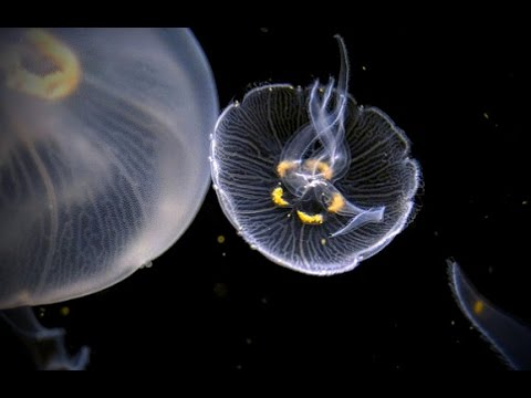 Jellyfish in Space - Kevin MacLeod - 1 HOUR