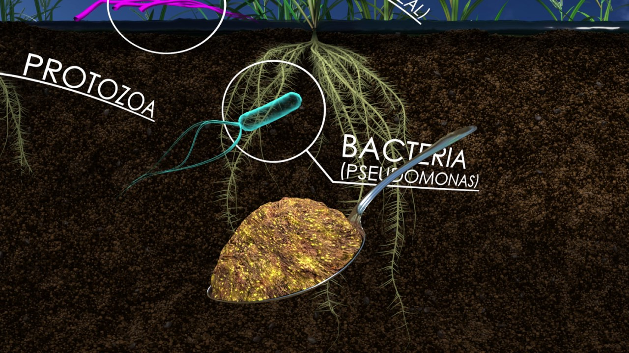 The Living Soil: How Unseen Microbes Affect the Food We Eat (360 Video)