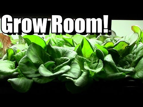 Grow Room Tour! (starting seeds in grow room vs direct sowing)