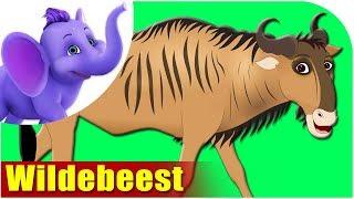 Animal Songs for Kids - Wildebeest Song