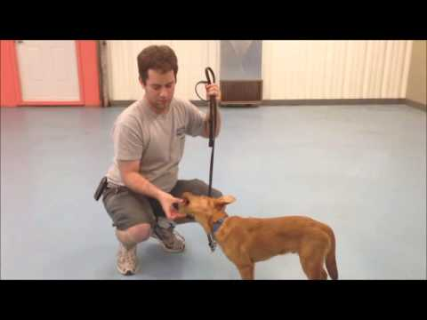 Fixing Resource (Object) Guarding in Dogs
