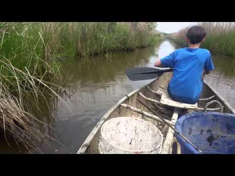 Catching crawfish on the bayou