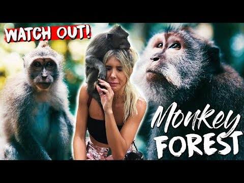 UBUD MONKEY FOREST (WATCH OUT!)