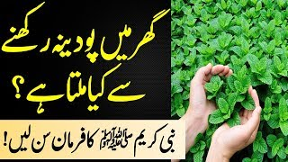 What did the Holy Prophet say about mint? | The wonderful benefits of mint | Mint juice benefits