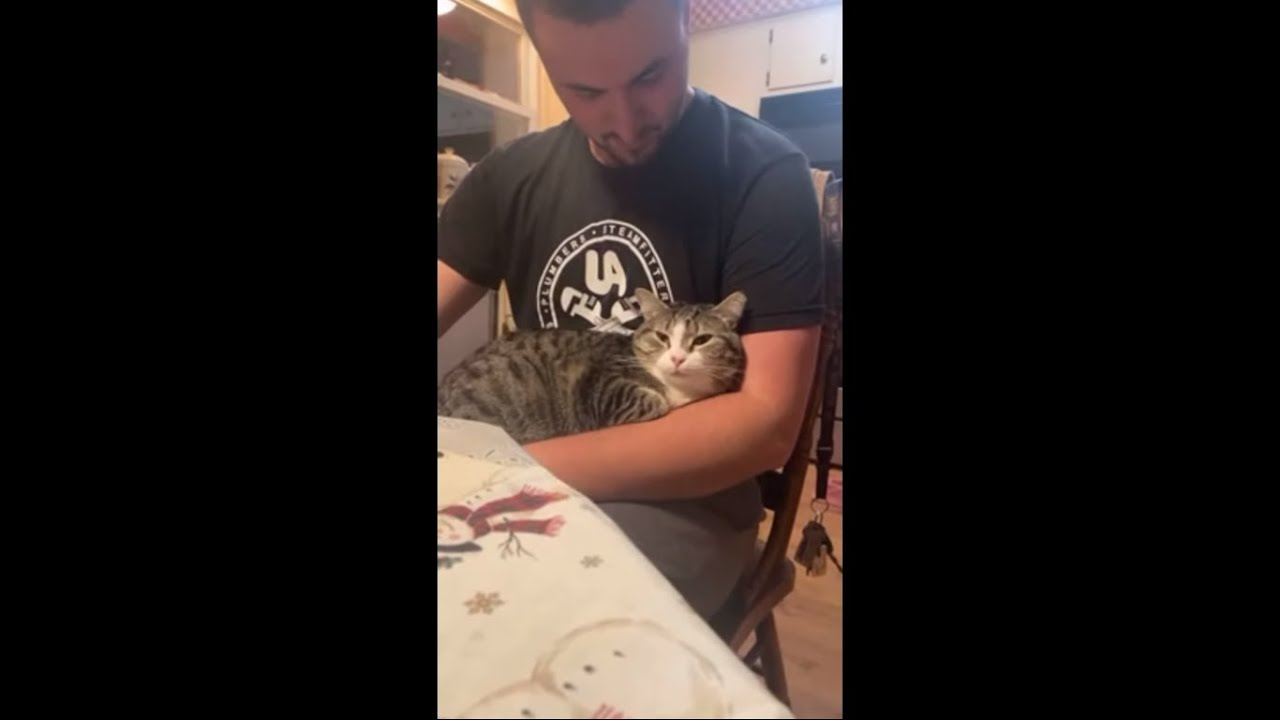 Cat Licks Daddy's Arm as It Sits Comfortably on His Lap