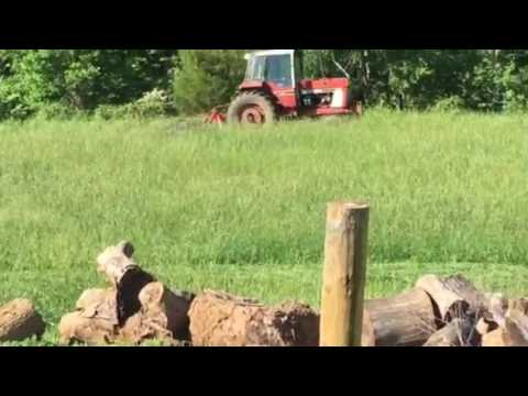 Cutting hay 1st cutting ( cutting with International 1086 and New Holland 617 disc cutter Part 2
