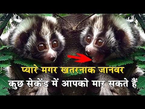 प्यारे मगर खतरनाक जानवर जो आपको मार सकते हैं| Dangerous Animals That Can Kill You|endangered animals