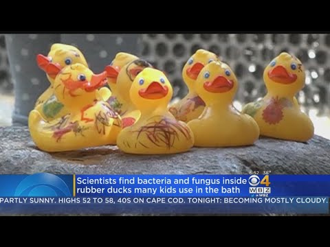 Scientists Find Bacteria And Fungus Inside Rubber Ducks