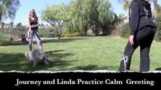 Wolfdog Training with Journey