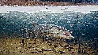 БОЛЬШАЯ ЩУКА СЪЕЛА КАРАСЯ! Зимняя рыбалка на жерлицы. Атака щуки. Подводная съемка