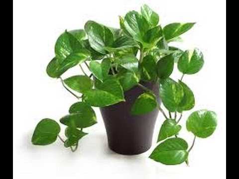 10 Indoor Plants That Clean The Air And Remove Toxins