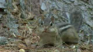 Chipmunks And Squirrels Oh My:)