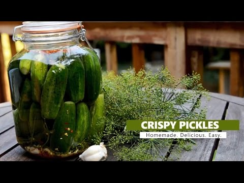How to make Crispy Garlic Dill Pickles (fermented)