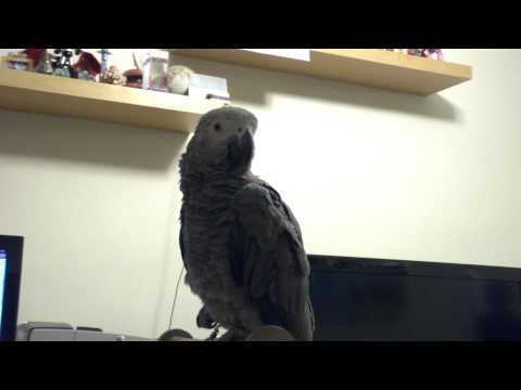 My parrot likes biting toes (part 2)
