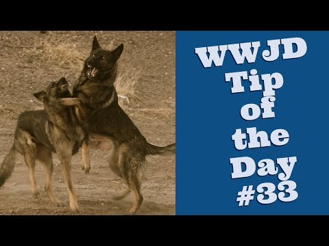 What Would Jeff Do? Dog Training Tip #33 Punishment