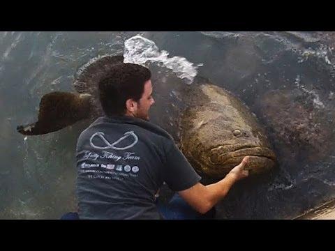 Bridge Fishing For Giant Goliath Grouper!