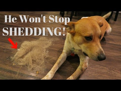 How to Stop your Dog from SHEDDING! | InRuffCompany.com