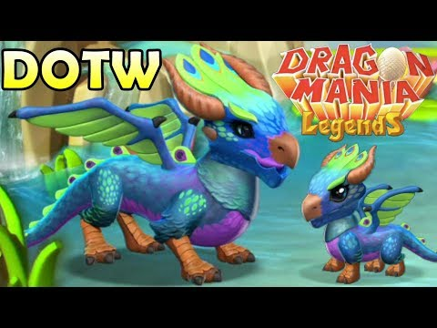 PEACOCK DRAGON BREEDING GUIDE! How to Breed the Peacock Dragon DML [DOTW 29-5th Feb]