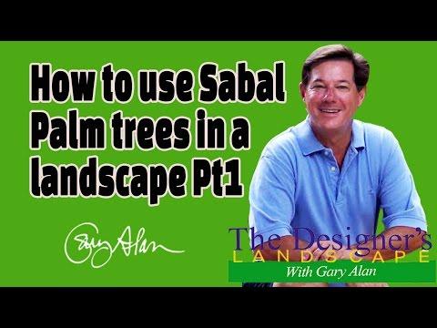 How to use Sable Palms in a Landscape Pt 1 DesignersLandscape#608