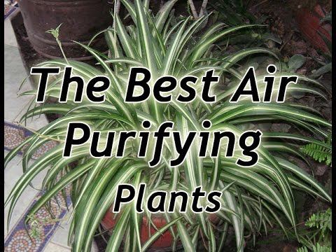 Best Air Cleaning Houseplants that are Almost Impossible to Destroy