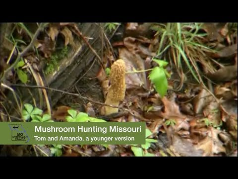 Mushroom Hunting Missouri How To Find and Cook