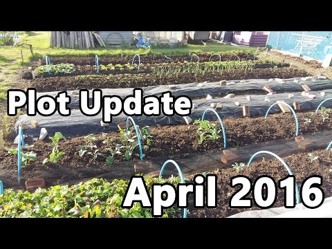 Plot Update - April 2016