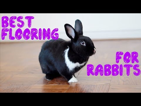 The Best Flooring For Rabbits