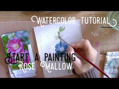 Behind the scenes, Starting a new painting: Rose Mallow