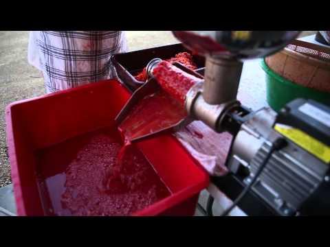 Tomato Passata Day - 13 Acres & Home Make It