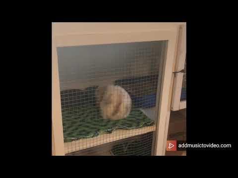 DIY Rabbit Hutch
