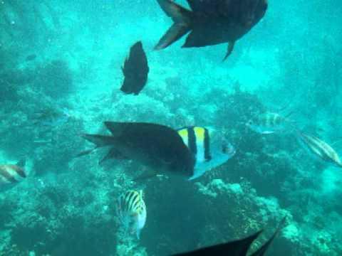 Palawan Honda Bay Pandan Island feed fish