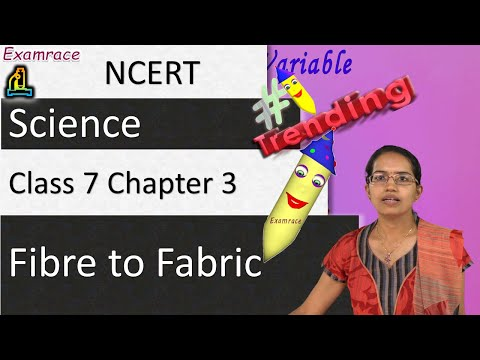 NCERT Class 7 Science Chapter 3: Fibre to Fabric (NSO/NSTSE/Olympiad)